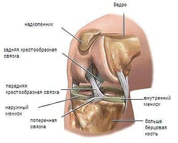 Лечение болей коленных суставов артроз локтевого сустава у собаки лечение